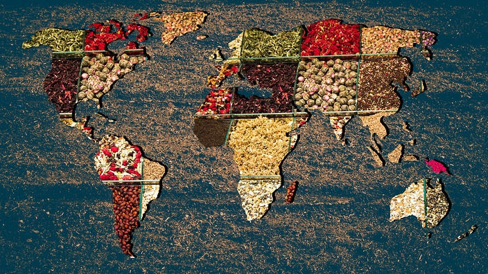 How Global Diet Link Environmental Sustainability And Human Health?