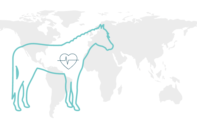 Deadliest Equine Diseases And Their Detection